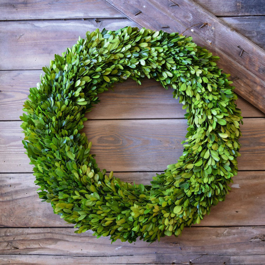 Preserved Boxwood Round Wreath - 20 Inch - Bella Marie