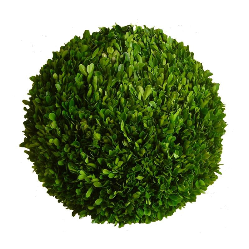 Preserved Boxwood Ball - 22 Inch - Bella Marie