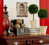 Preserved Boxwood Single Ball Topiaries - 16 Inch (SET OF 2) - Bella Marie - 3
