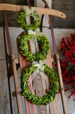 Preserved Boxwood Round Wreath - Set of three - Bella Marie - 1