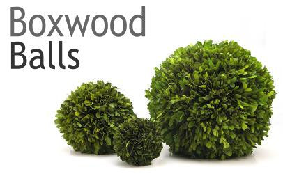 Preserved Boxwood Ball Collection