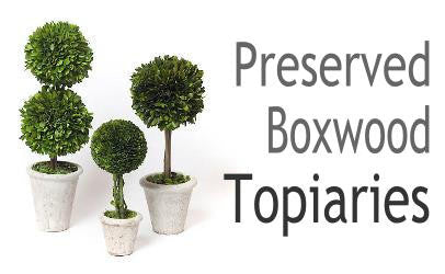 Preserved Boxwood Topiary Collection