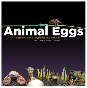 Animal Eggs book cover image