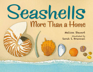 Seashells: More Than A Home book cover