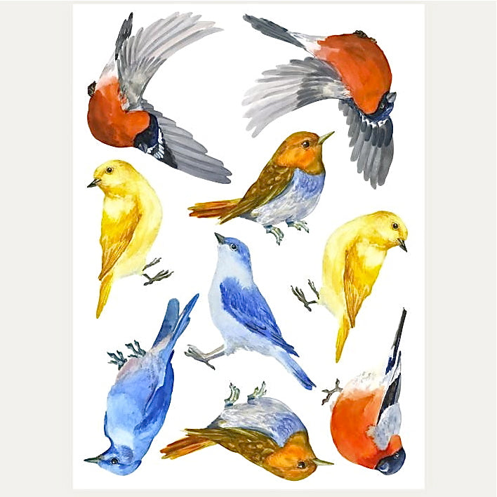 Backyard Bird Wall Decals