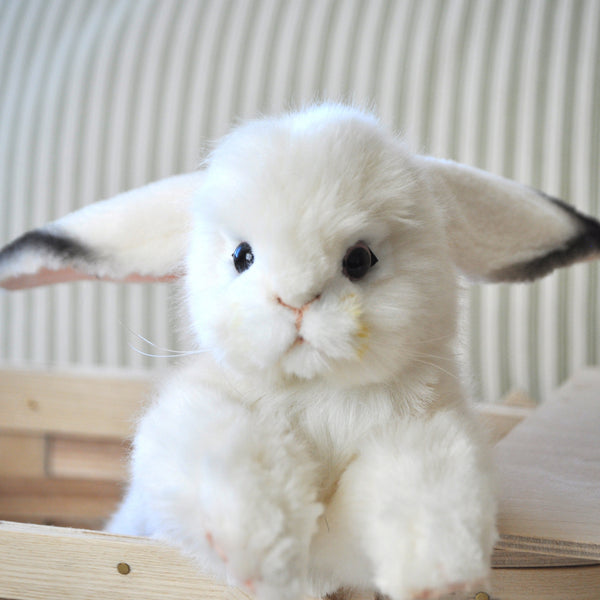 Baby Artic Hare