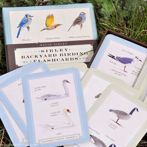 Sibley Backyard Birding Flash Cards