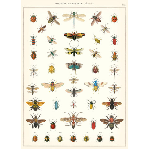Natural History Insect Poster
