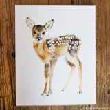 Woodland Fine Art Prints
