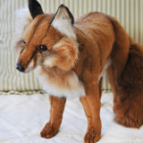 Red Fox Standing