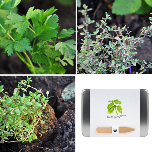 Organic Culinary Herb Garden Kit