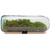 Eco-Friendly Terrarium Kit