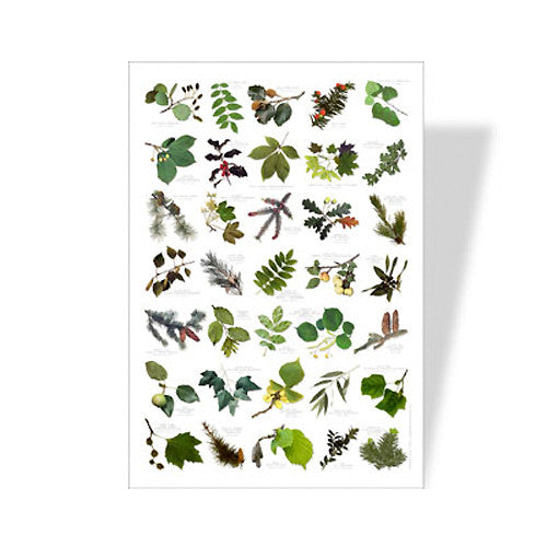 Tree Leaves Poster