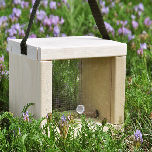 Small Window Bug House