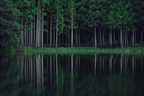 Green forest reflected along a lake.