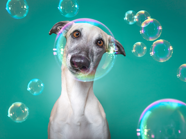 dog surrounded by bubbles on blue background