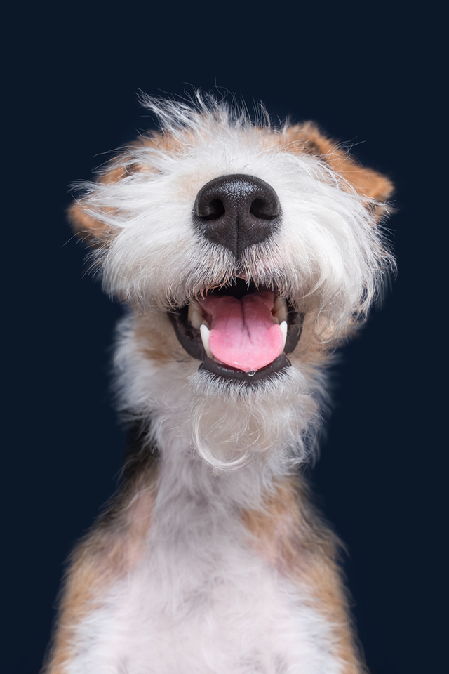 dog smiling at camera with only mouth, nose and teeth showing