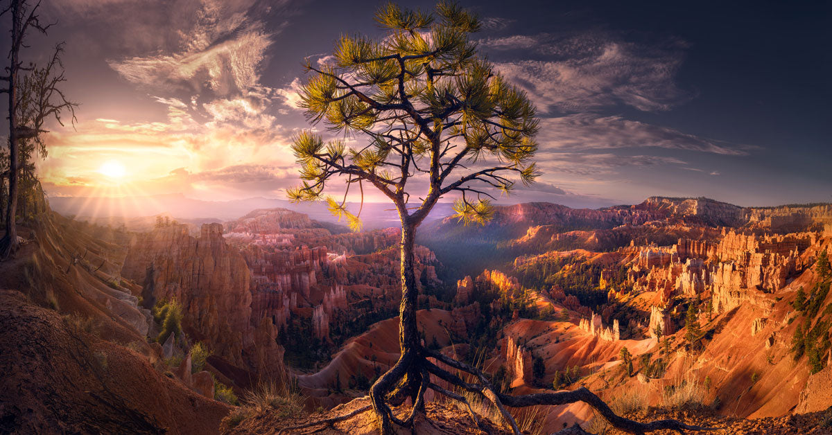 Bryce tree roots captured by chance allred