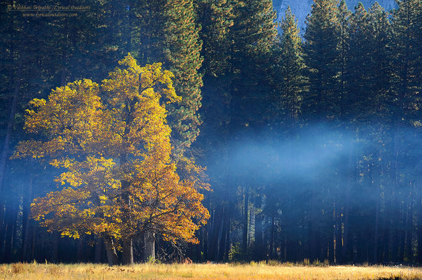Autumn mist, Yosemite National Park, California - Telephoto Landscapes by Vaibhav Tripathi