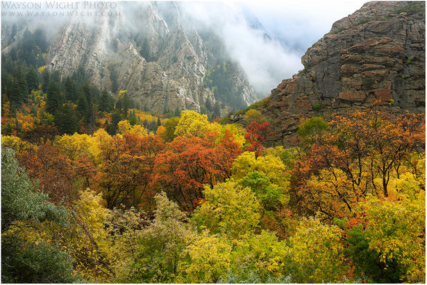 Fall in Big Cottonwood Canyon Utah - Best Photos of 2013 with Wayson Wight