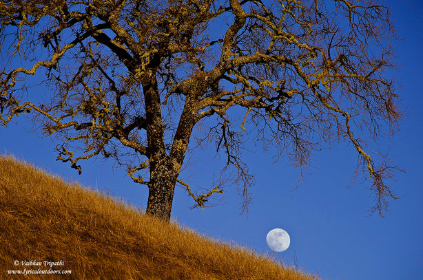 Oak and moonrise, Santa Cruz Mountains, California - Telephoto Landscapes by Vaibhav Tripathi