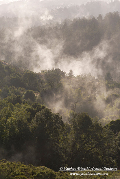 Rising morning mist, Santa Cruz Mountains California - Telephoto Landscapes by Vaibhav Tripathi