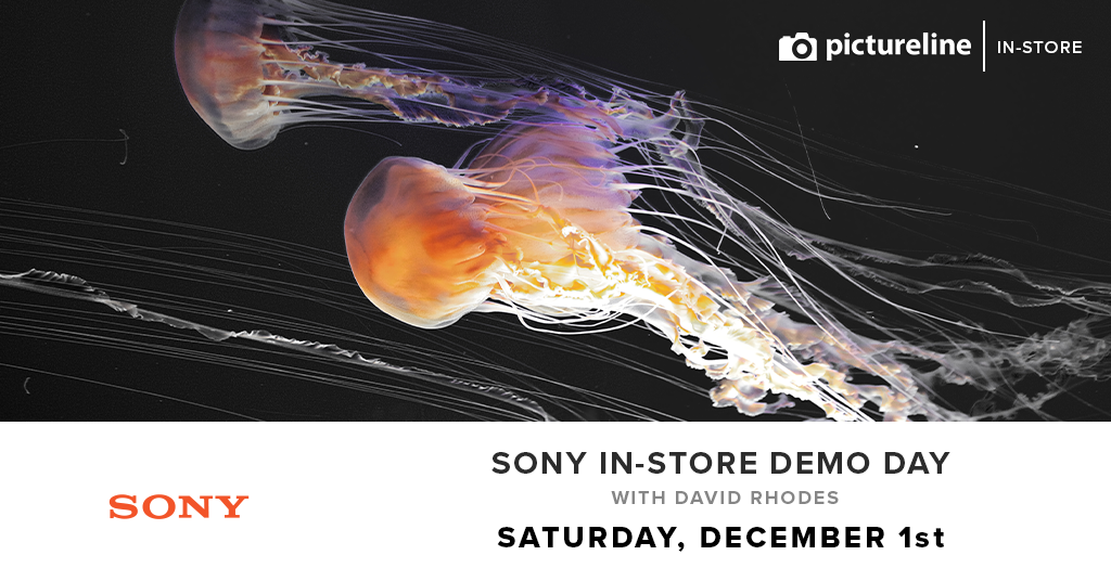 Sony Day with David Rhodes (December 1st, Saturday)