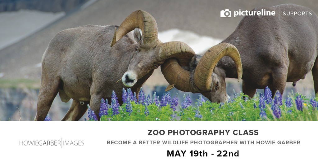 Zoo Photography Class with Howie Garber (May 19th, 20th, & 22nd)