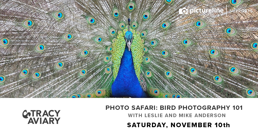 Photo Safari: Bird Photography 101 (November 10th, Saturday)