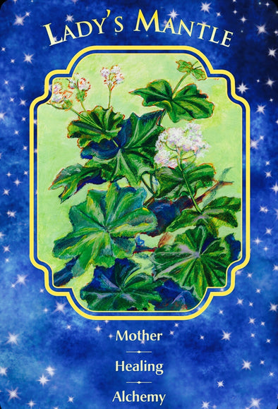 Lady's Mantle: Mother ~ Healing ~ Alchemy.