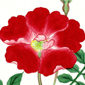 Flowers: Japanese Watercolors
