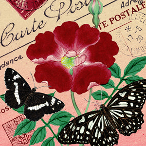 Butterfly Botanicals