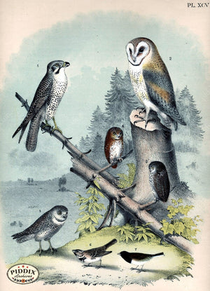 Birds Pdxc14163 Color Illustration