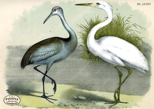Birds Pdxc3171 Color Illustration