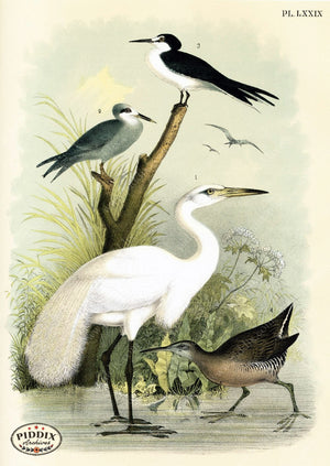 Birds Pdxc3173 Color Illustration