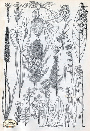 Black & White Leaves Pdxc11423 Engraving