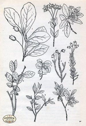 Black & White Leaves Pdxc11427 Engraving