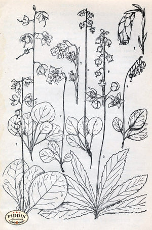 Black & White Leaves Pdxc11431 Engraving