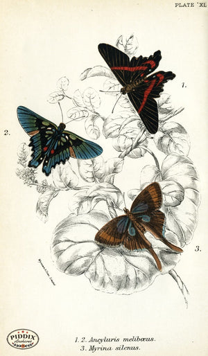 Butterflies Pdxc4384 Color Illustration