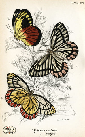 Butterflies Pdxc4400 Color Illustration