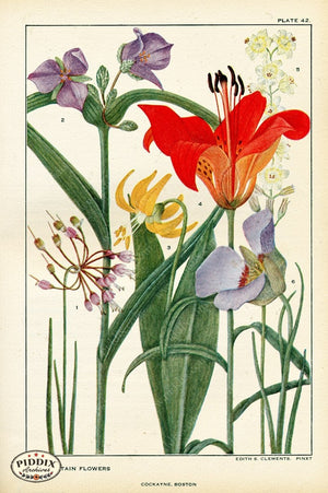 Flowers Pdxc11393 Color Illustration
