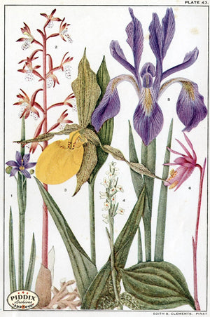 Flowers Pdxc11394 Color Illustration