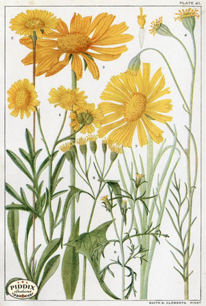 Flowers Pdxc11395 Color Illustration