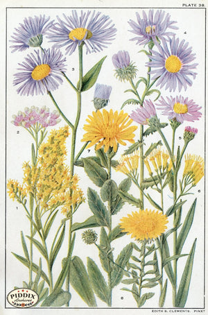 Flowers Pdxc11396 Color Illustration