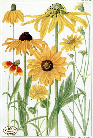 Flowers Pdxc11397 Color Illustration