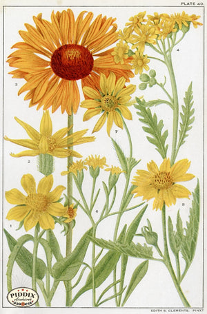 Flowers Pdxc11398 Color Illustration