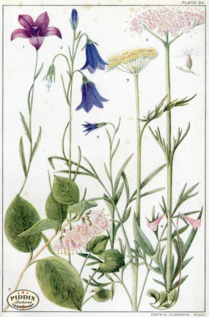 Flowers Pdxc11399 Color Illustration