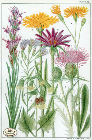 Flowers Pdxc11400 Color Illustration