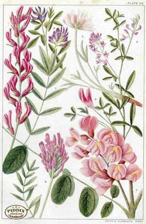 Flowers Pdxc11402 Color Illustration