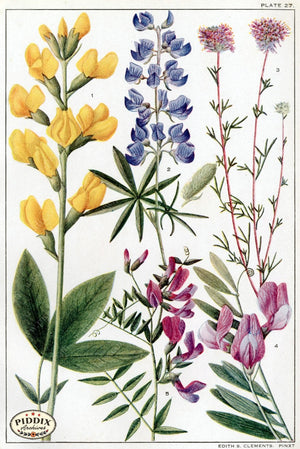 Flowers Pdxc11403 Color Illustration